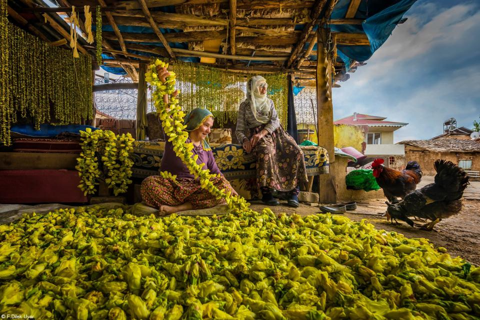 Photo competition, Food: Women in Turkey drying yellow okra flowers