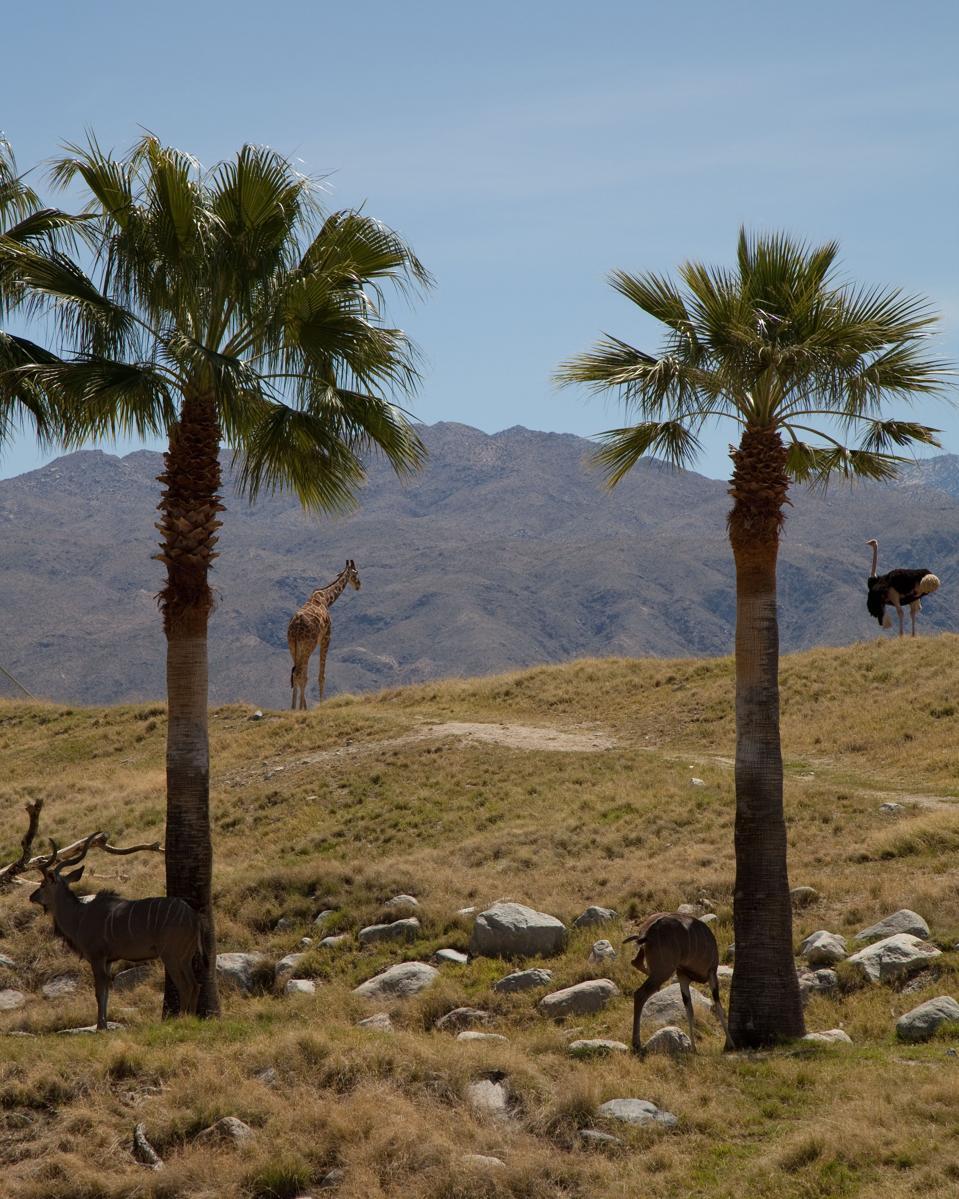 Le zoo et les jardins du désert vivant, Palm Desert, Californie