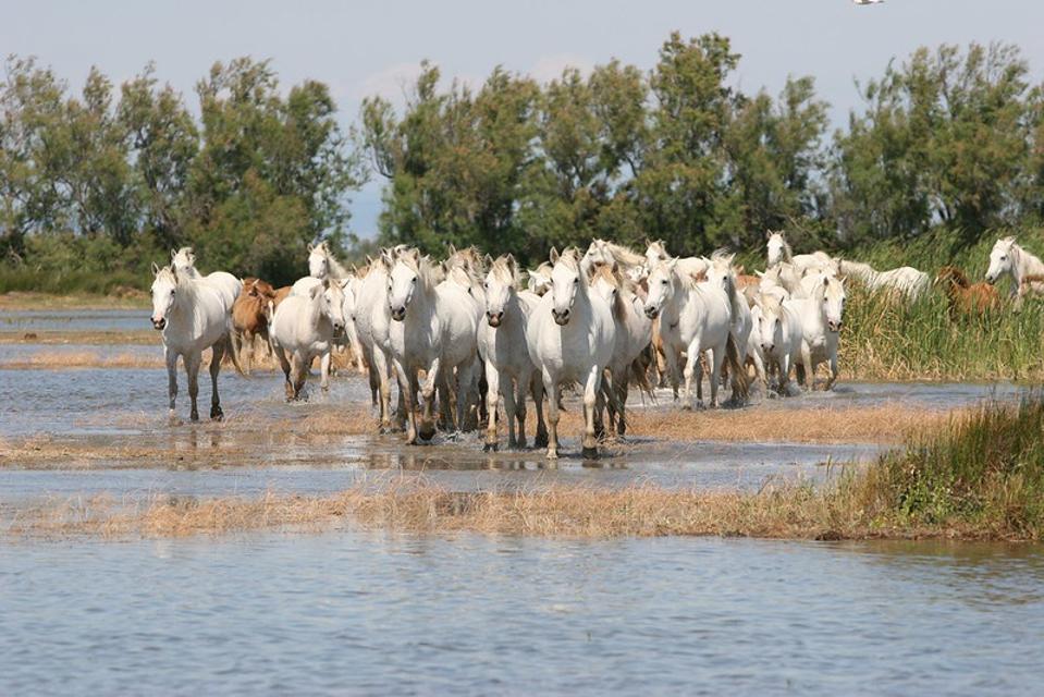 The Camargue Regional Nature Park