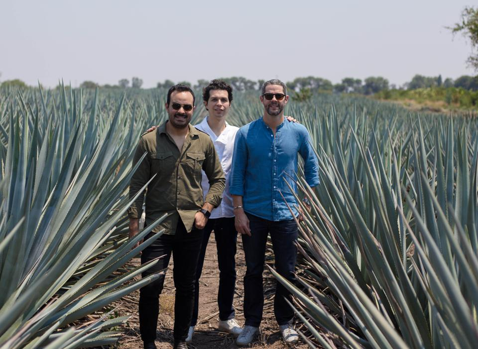 "Eduardo ""Lalo"" González, David Carballido and Jim McDermott, the team behind LALO tequila, in an agave field."