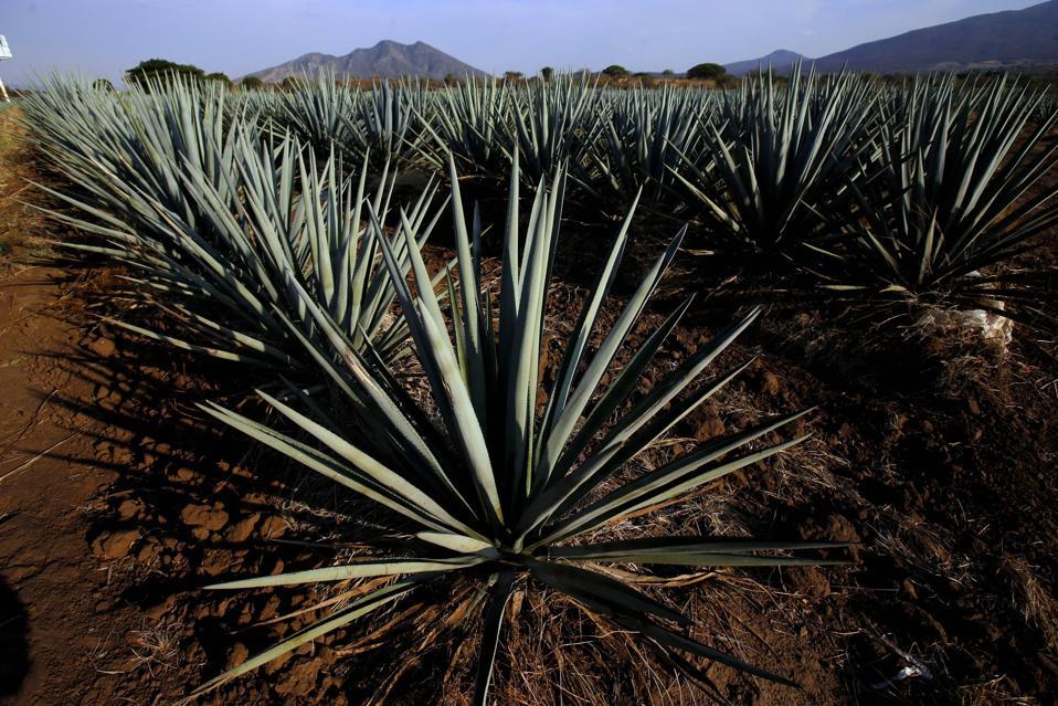 México, Estados Unidos, la economía y el tequila