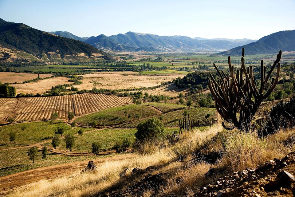 The organic vineyard in Chile that is the source of Kind of Wild's Sauvignon Blanc.