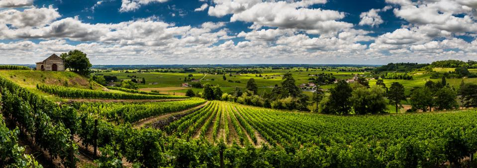 Panorama of vineyards under the beautiful sky with clouds. Bordeaux, France