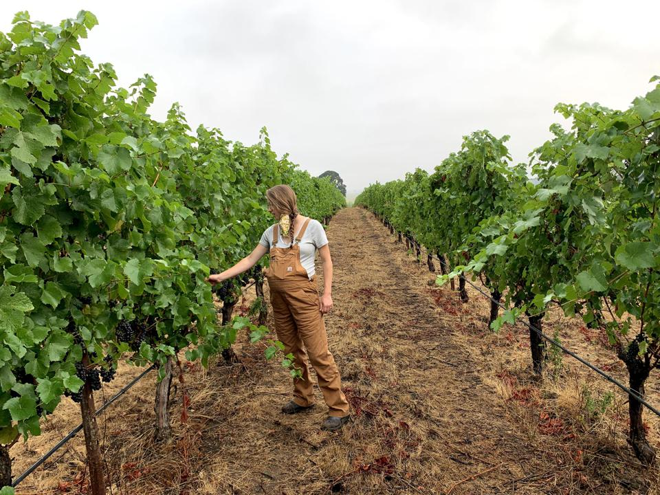 pregnant winemaker in Oregon vineyard