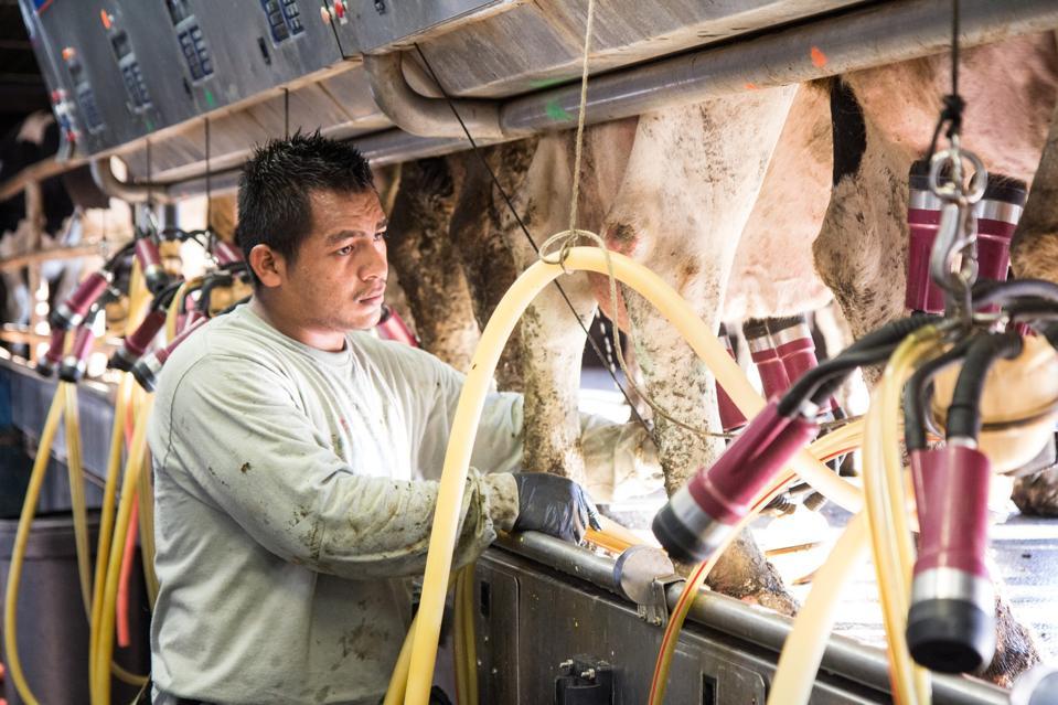 A dairy farmworker in Vermont.