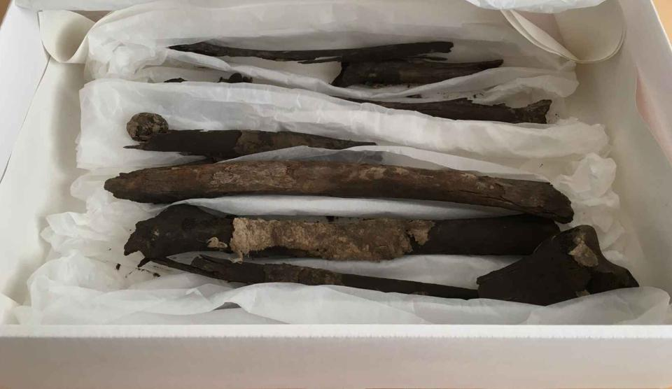 The missing bones from a 19th century Viking discovery in Denmark.