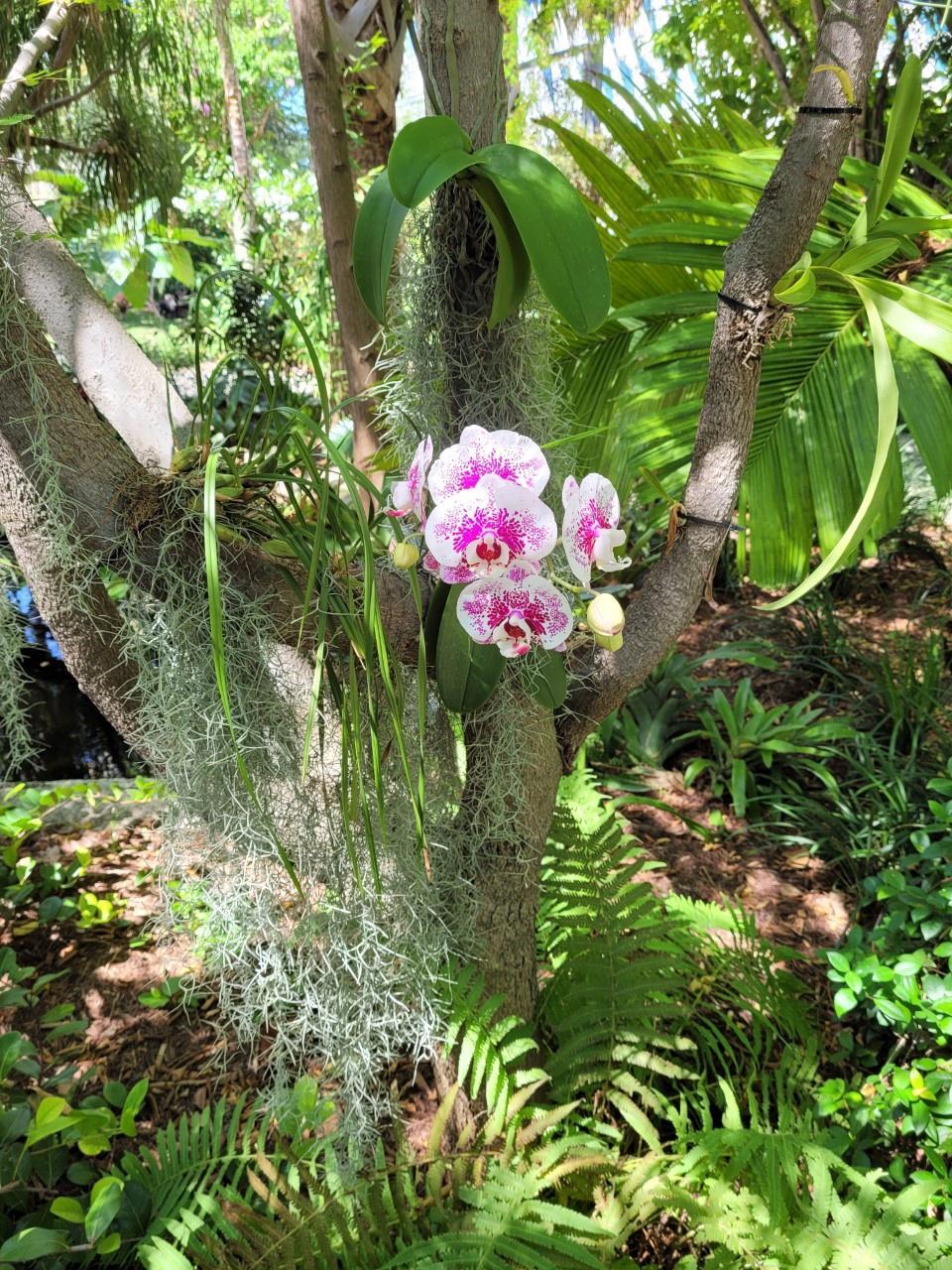 Orquídea en el Jardín Botánico de Miami Beach