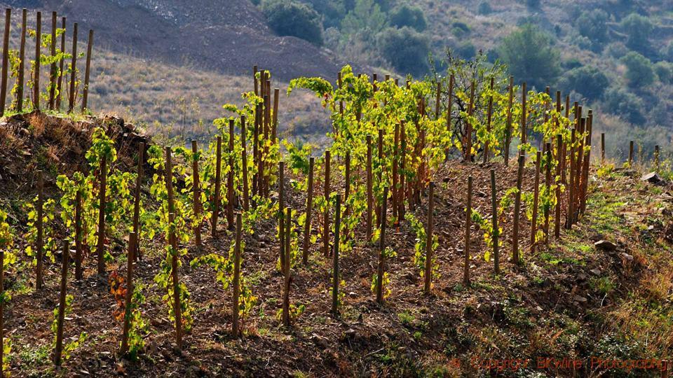 Vineyards of Mas Igneus near Gratallops in Priorat