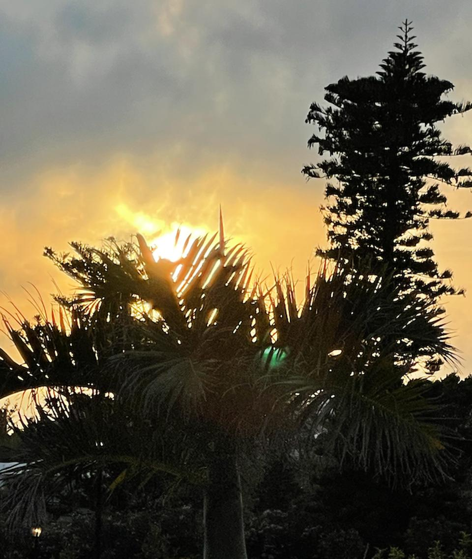 Sunset through the palm trees in Bermuda