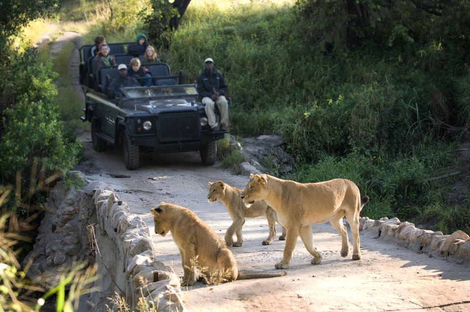 Keeping a distance: Lion Sands, Ivory Lodge