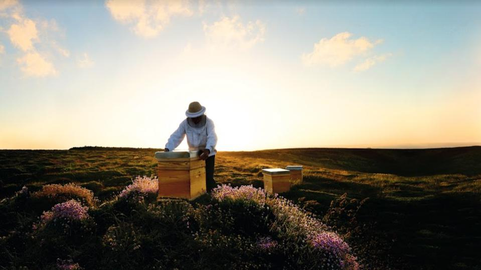 Guerlain Angelina Jolie Bee Preservation