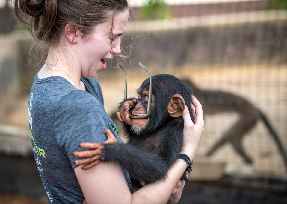 Young woman holding chimpanzee.