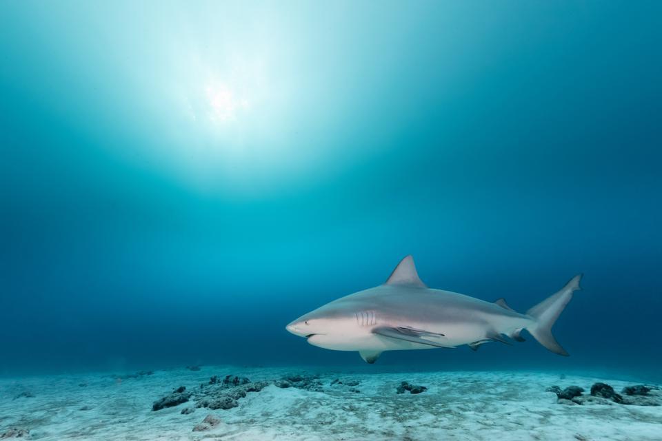 Close-up of fish swimming in sea, Playa del Carmen, Quintana Roo, Mexico