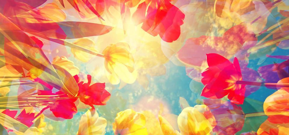Abstract colored background with beautiful flowers, tulips and soft hues