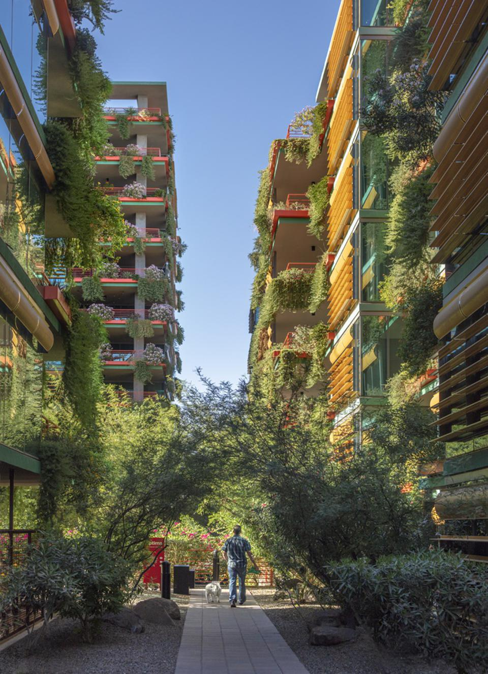 Optima Sonoran Village's luxury apartments are accentuated by vertical gardens.