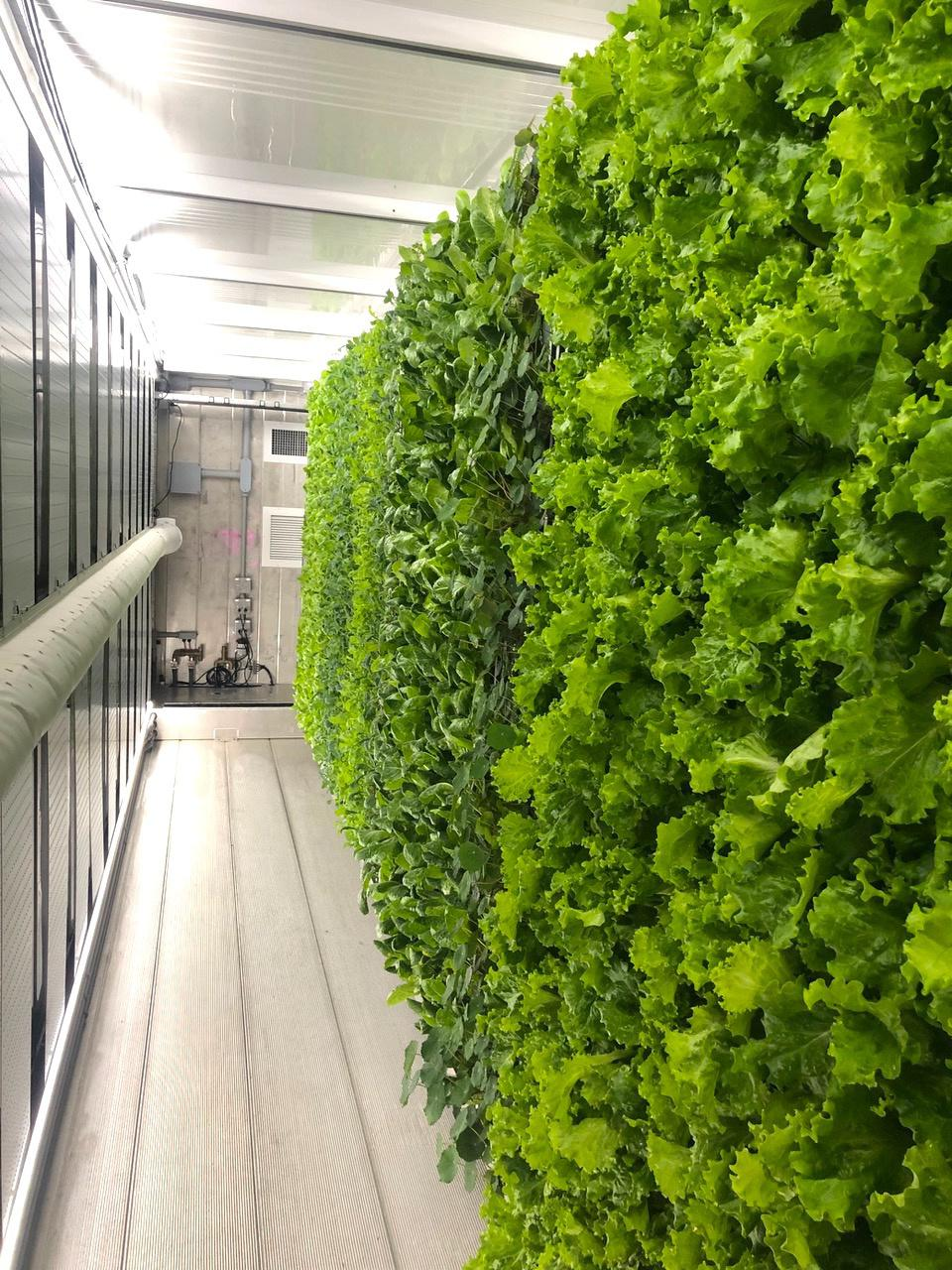 REEF tech miami vertical farming container housing