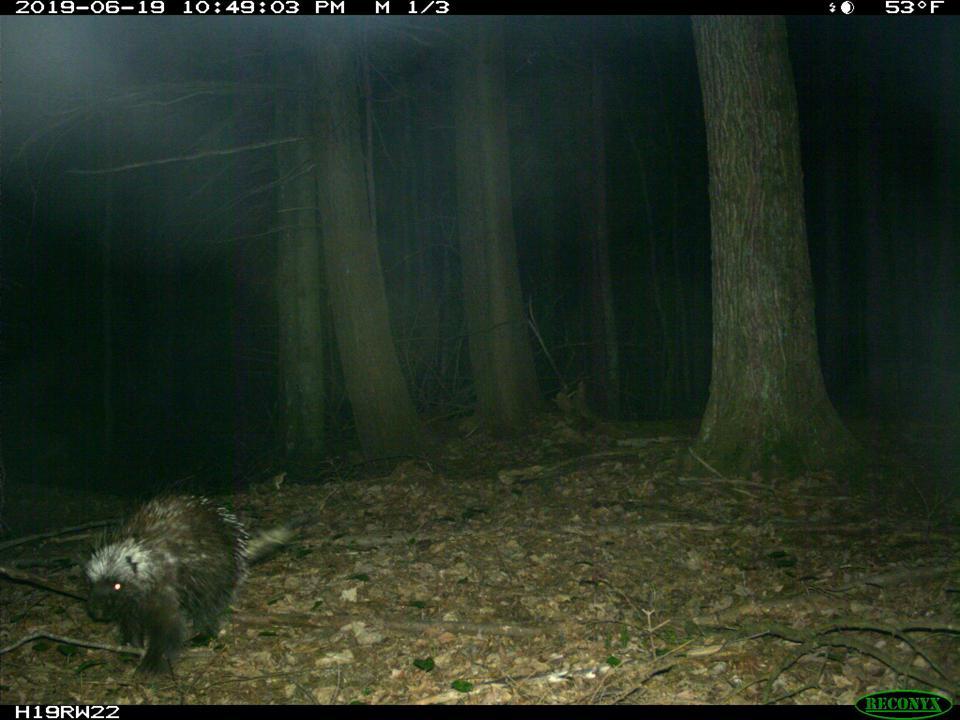 porcupine night michigan upper peninsula citizen science identification study