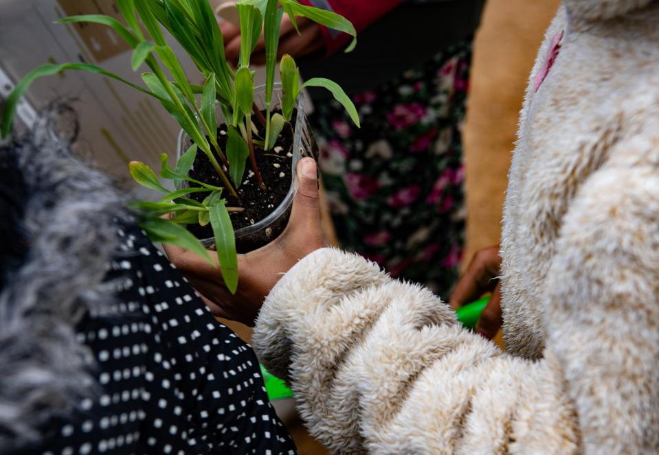 A hand holds a plastic container with soil and several green plants.