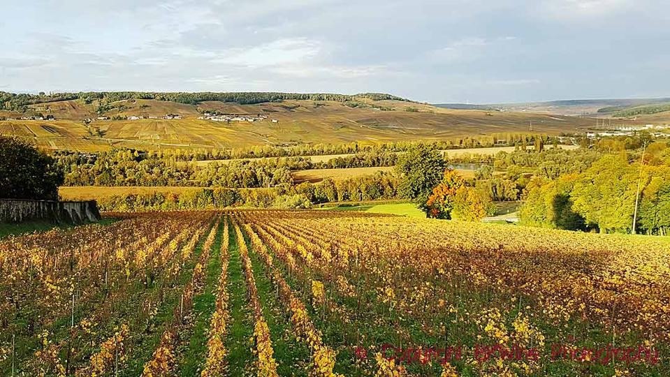 Vineyards in the Vallee de la Marne Valley in Champagne