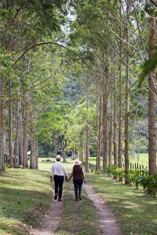 Panama coffee plantations