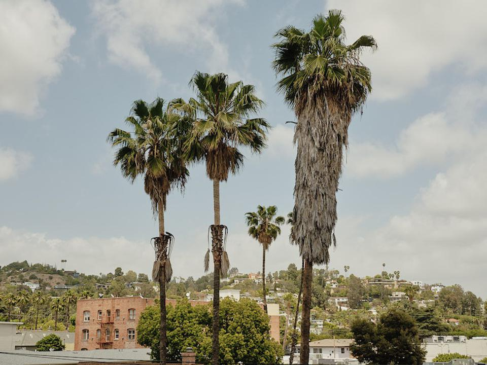 A view with palm trees and hills