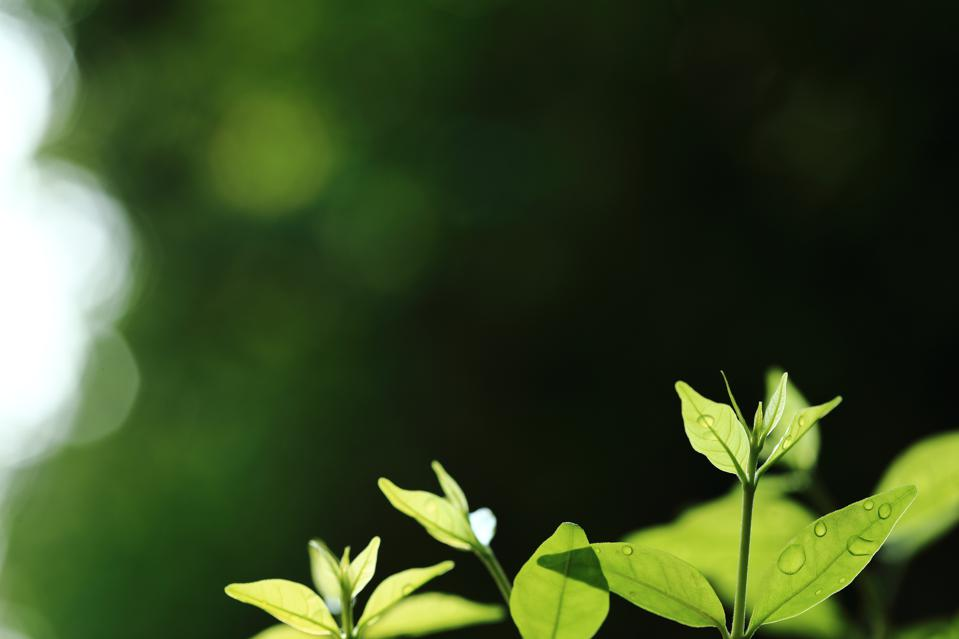 new leaves growing up. new life springing from nature. green leaves and dazzling warm bokeh lighting background. circle of life and environmental awareness and ecosystem conservation themes.