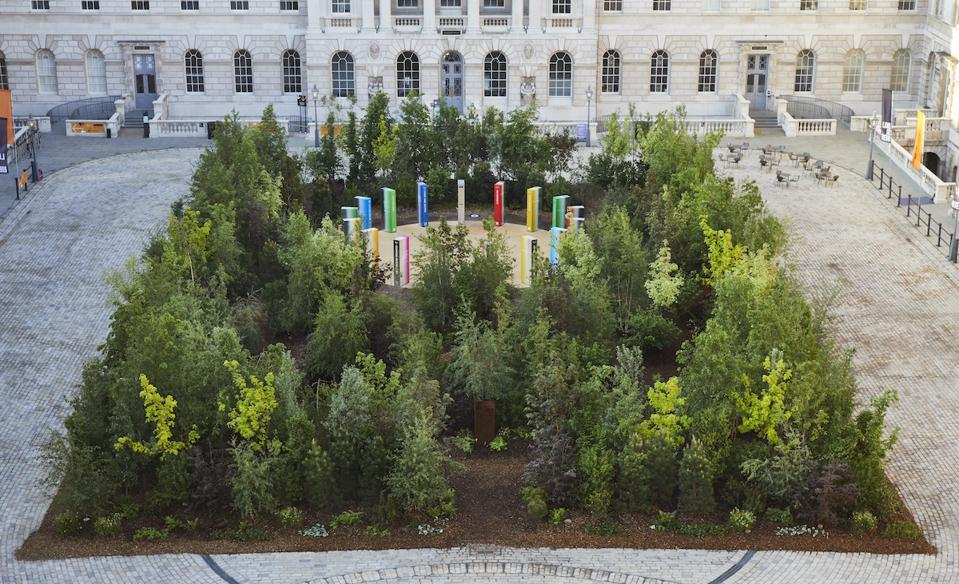 Forest of trees in courtyard