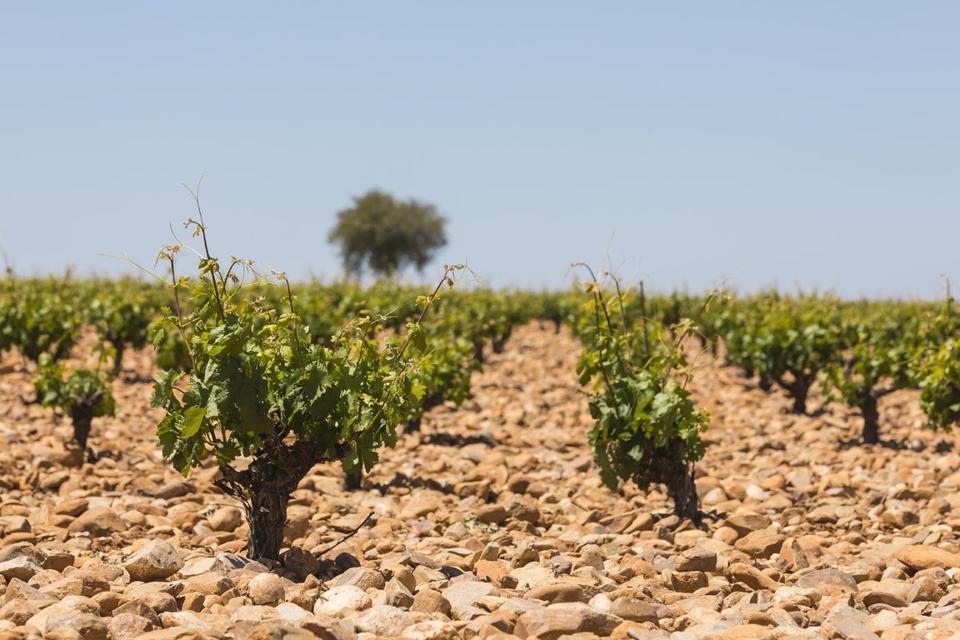 Vega Sicilia's Pintia Vineyards in Toro, Spain
