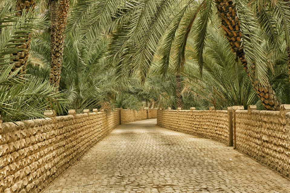 A tiled and walled walkway surrunded by date palms