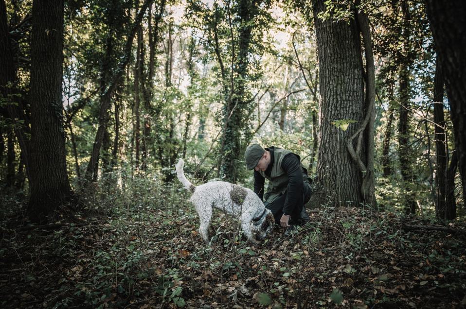 Truffle hunting from Casa di Langa in Piedmont.