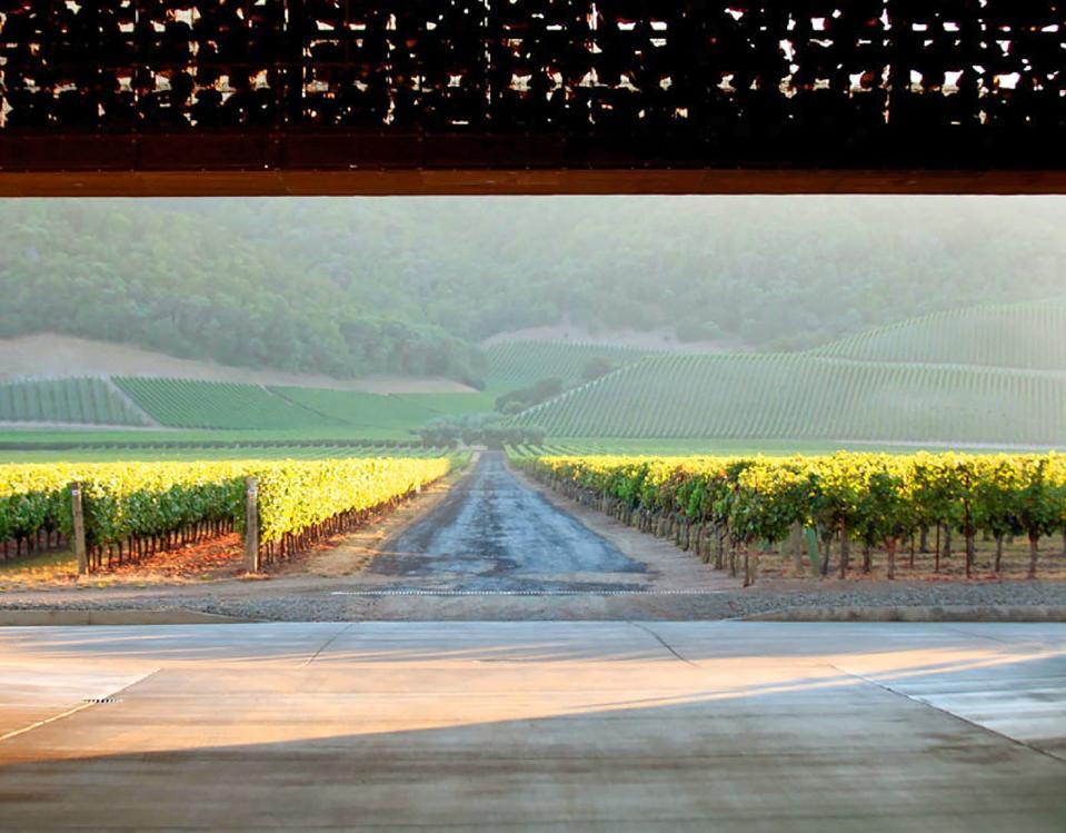 The Dominus estate vineyard, Napa Valley