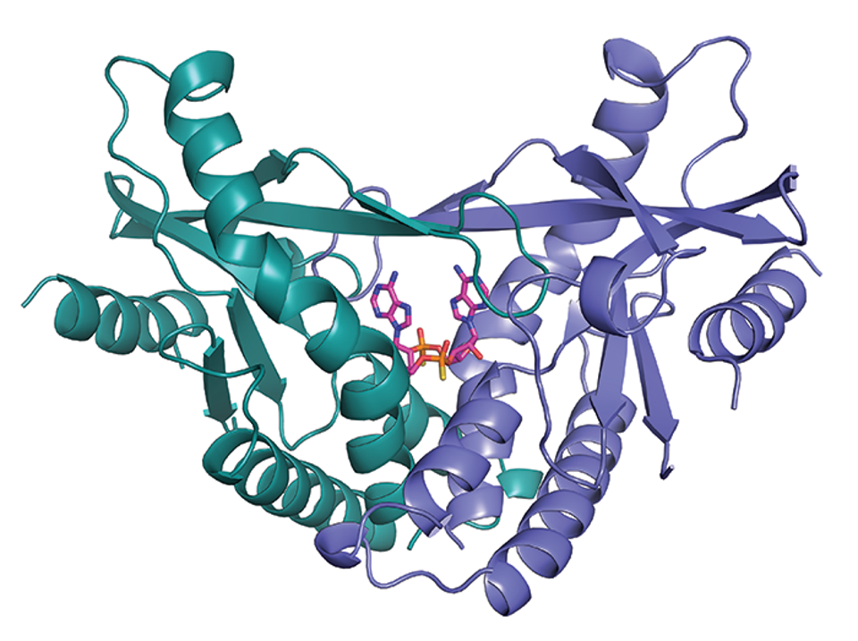 The crystal structure of human STING