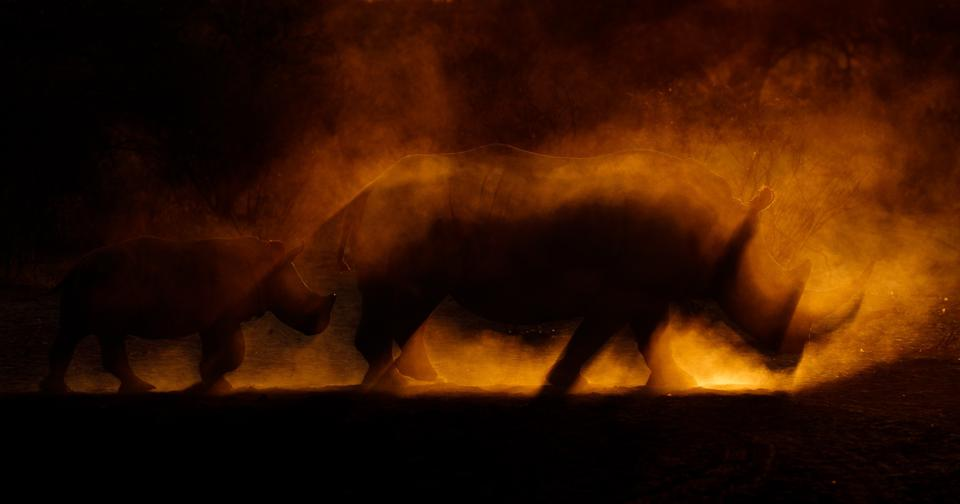 A mother rhino and her calf under clouds of amber dust.
