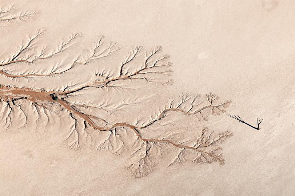 The shadow of an ancient Camel Thorn tree reaches out, in the sand in Namibia.