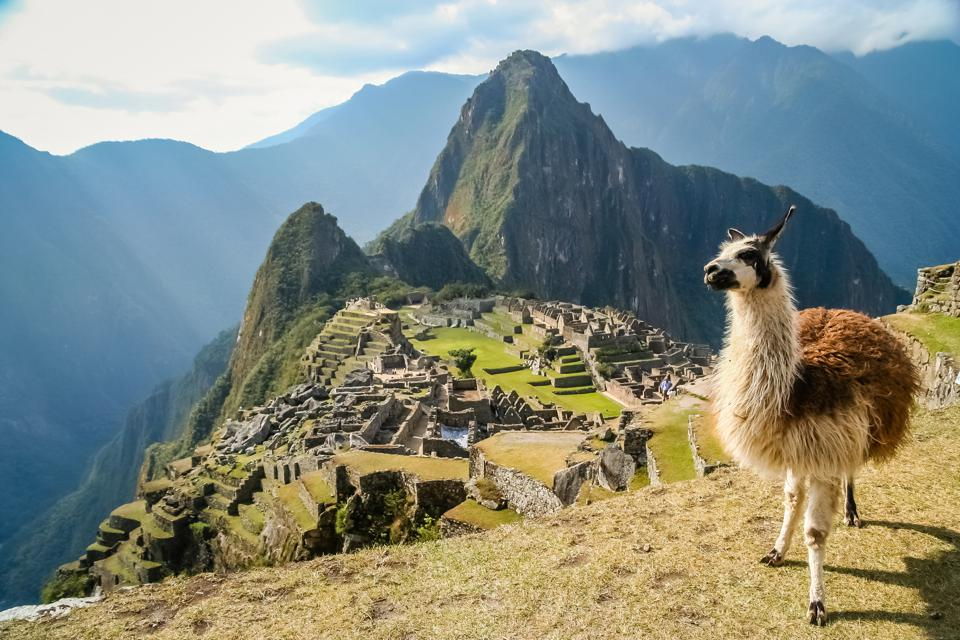 A brown llama looks at the camera; behind and below it are the ruins of Machu Picchu framed by mountains.