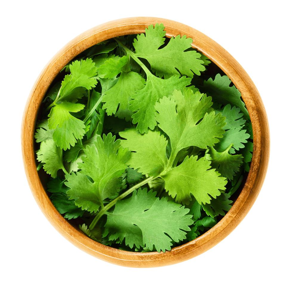 Green coriander (cilantro) leaves in a wooden bowl on white background.