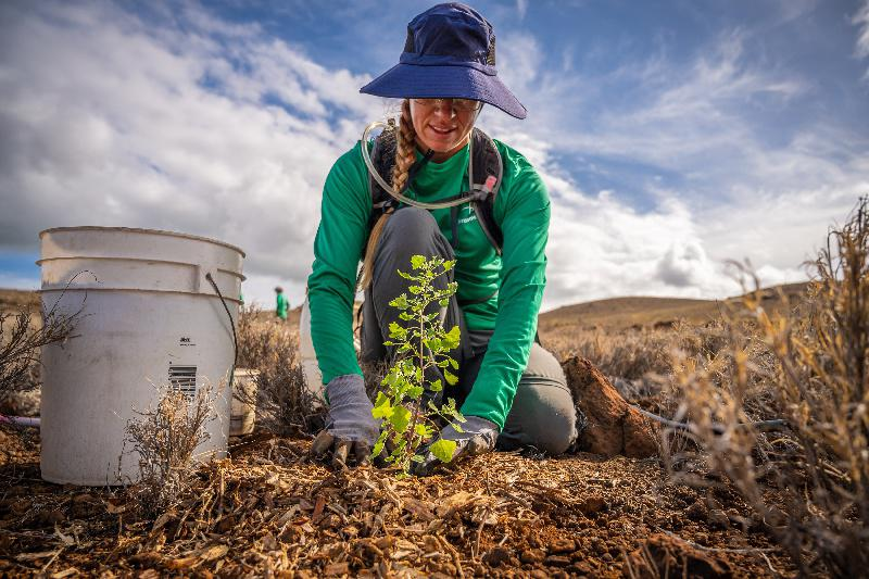 Terraformation member plants a tree at the site in Hawai'i.