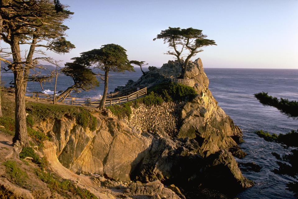 The Lone Cypress on 17-Mile Drive in Pebble Beach