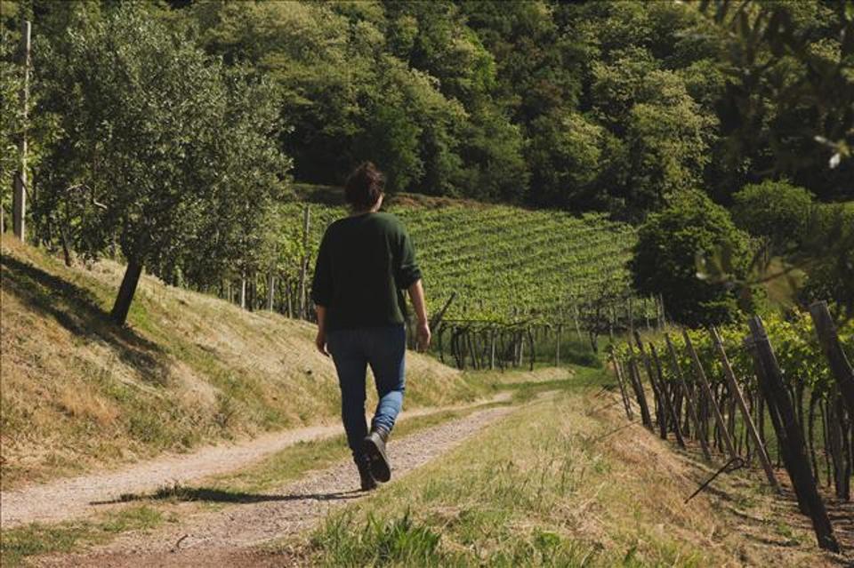 Fongaro vineyards, Ronca, Province of Verona, Veneto
