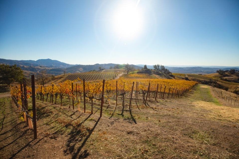 WindRacer vineyard site