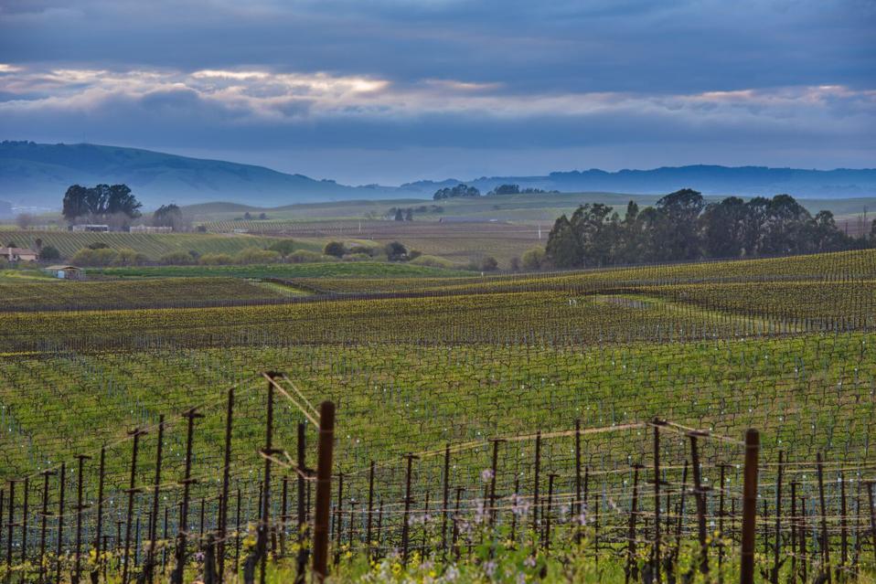 Bouchaine Vineyard in Carneros, Napa Valley, California