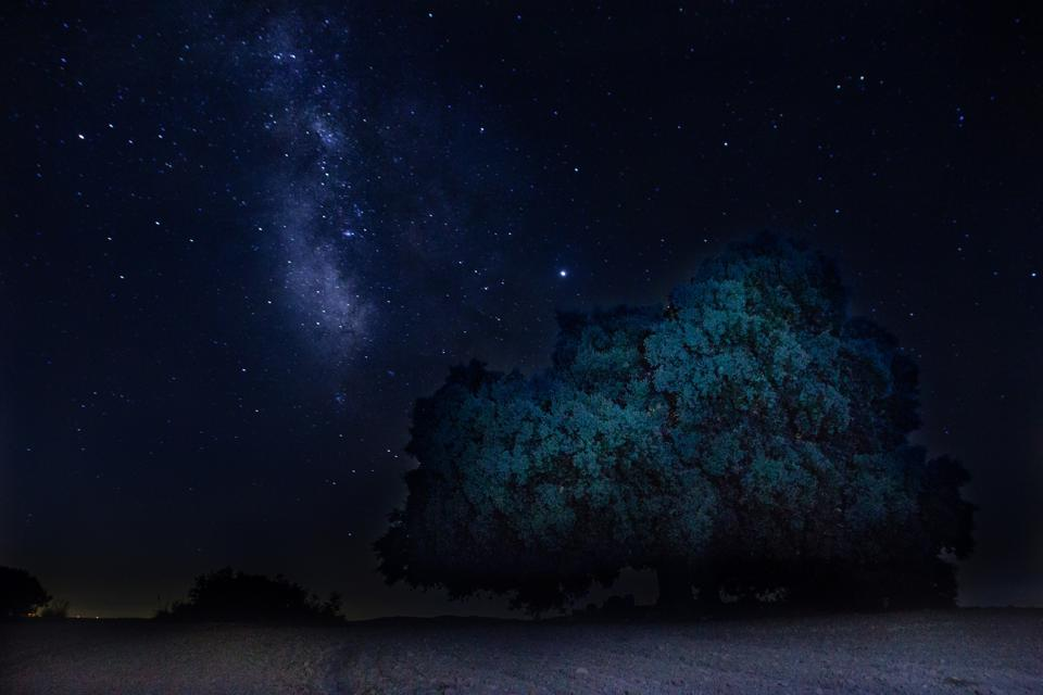 View Of Star Field Against Sky At Night. Milky Way. Tree