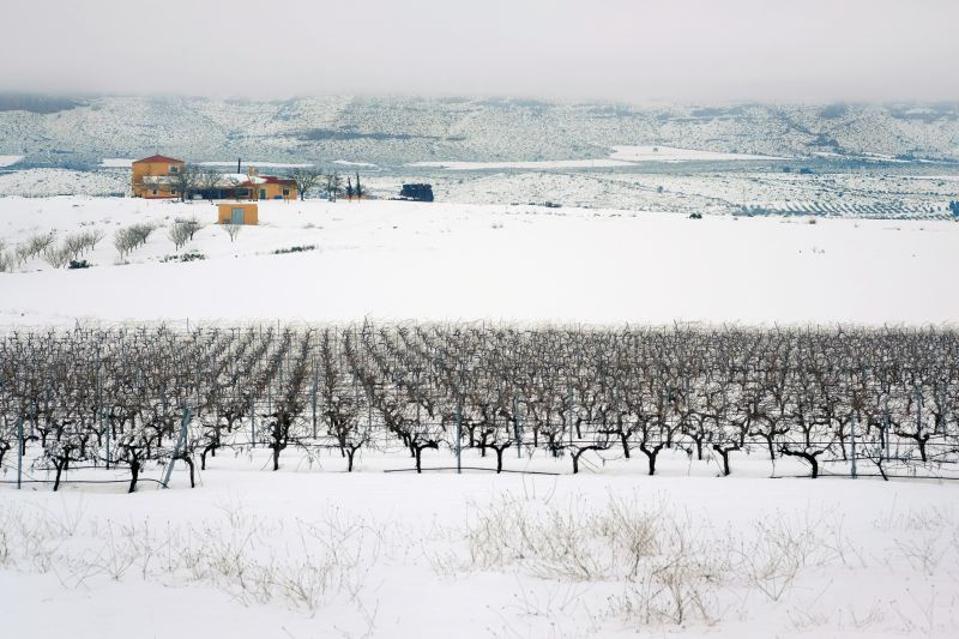 Bodegas Piqueras with surrounding vineyards during the winter  Photo Credit Bodegas Piqueras