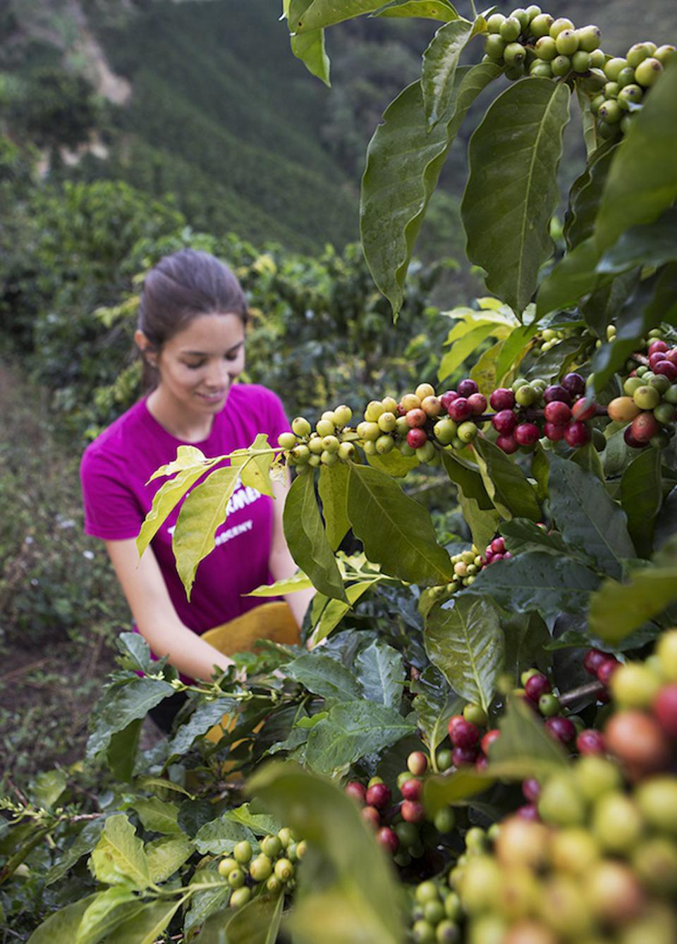 Maria Palacio is the CEO and founder of Progeny Coffee.