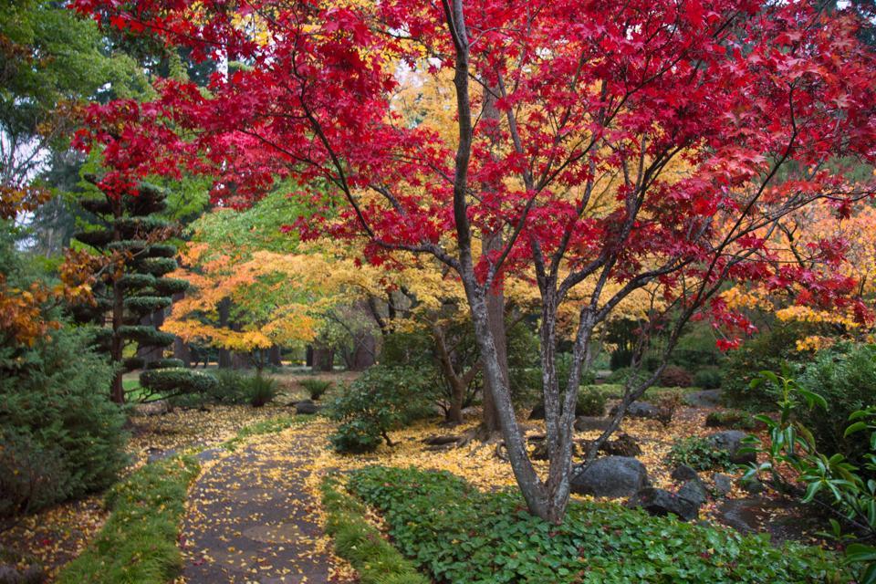 autumn garden path