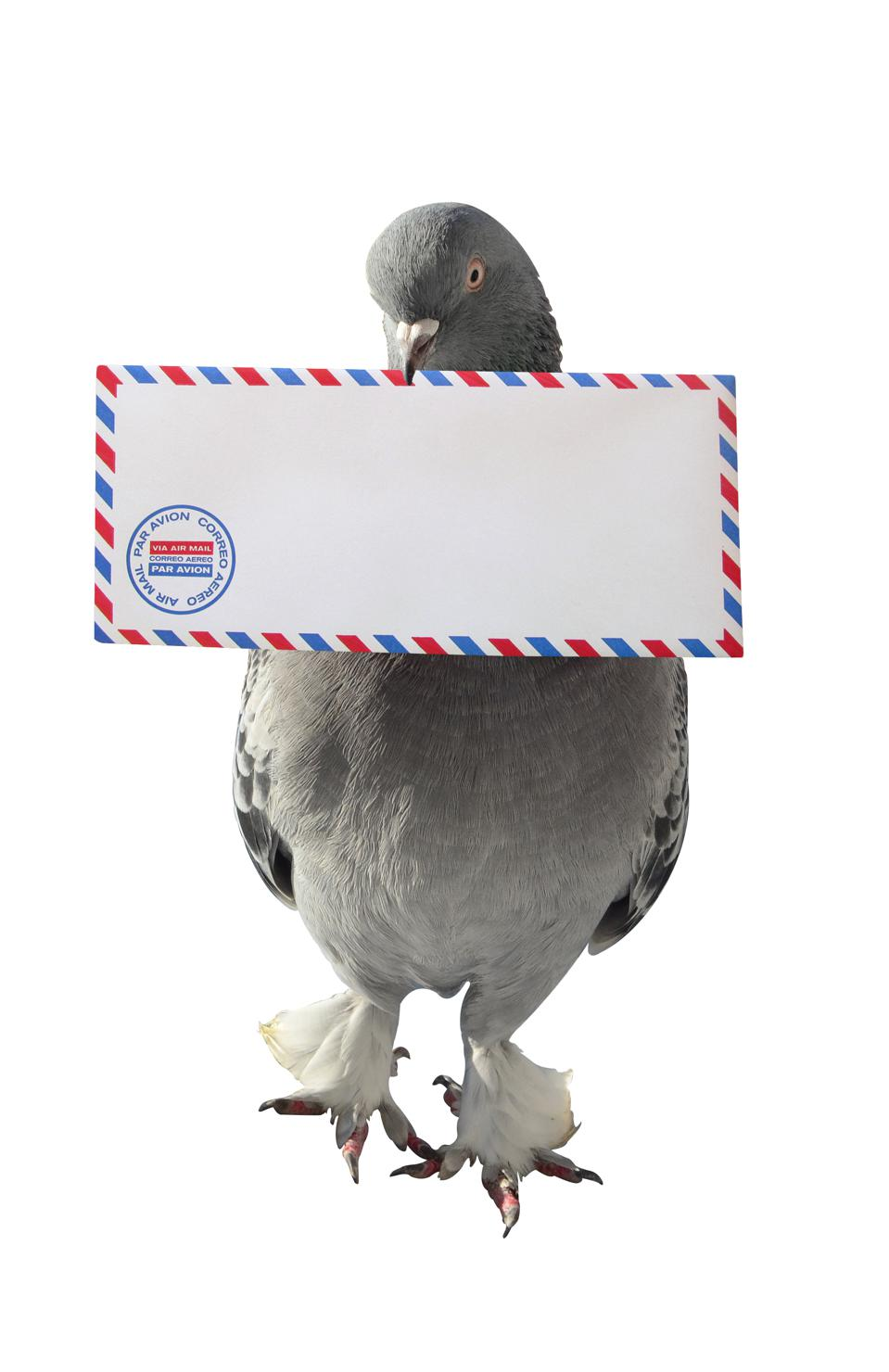Sometimes it would be quicker to use a carrier pigeon to send data between firms than to use the systems we sometimes rely on