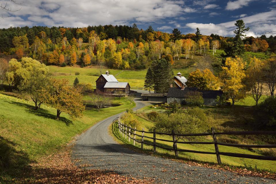 Bright Fall leaves around Sleepy Hollow Farm on Cloudland Road Woodstock Vermont