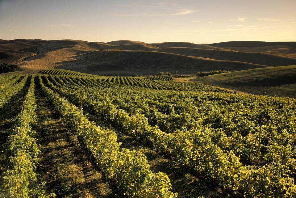 Spring Valley Vineyards, Walla Walla, Washington