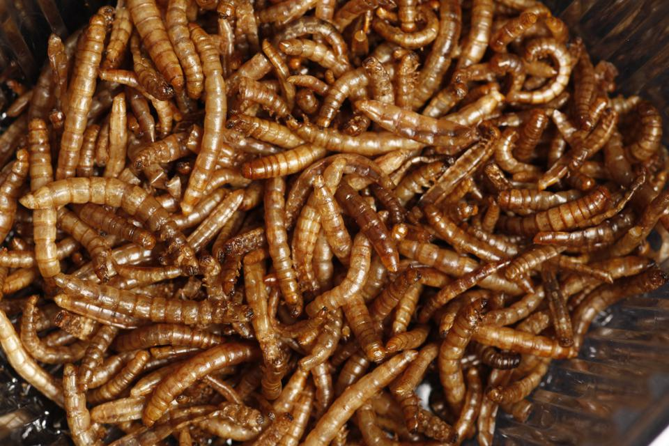 Edible Insects Most Likely Coming To European Supermarkets Soon