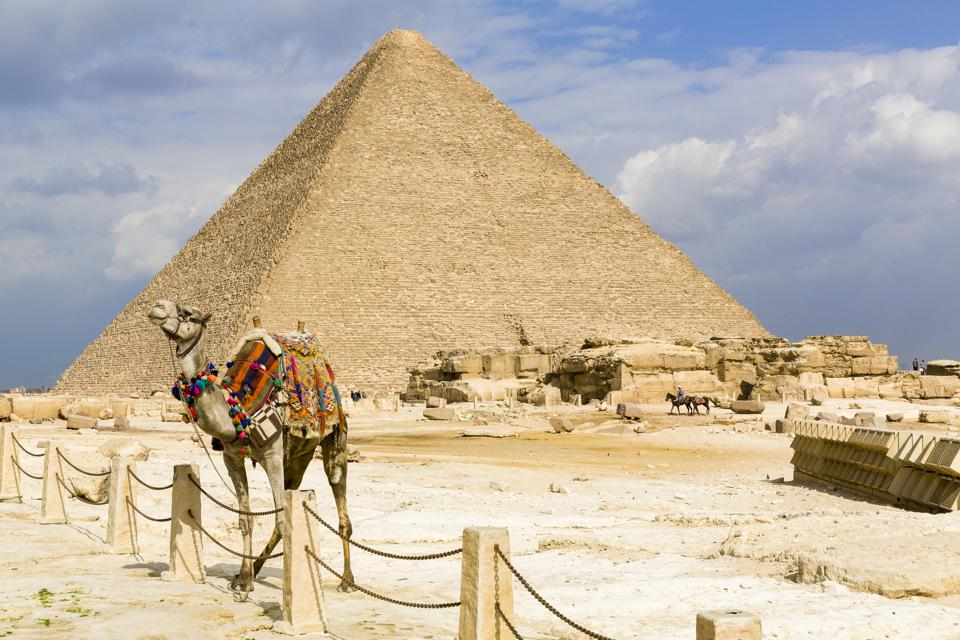Egypt, Cairo: dromedary in front of the Great Pyramid of Giza (also known as the Pyramid of Khufu or the Pyramid of Cheops)
